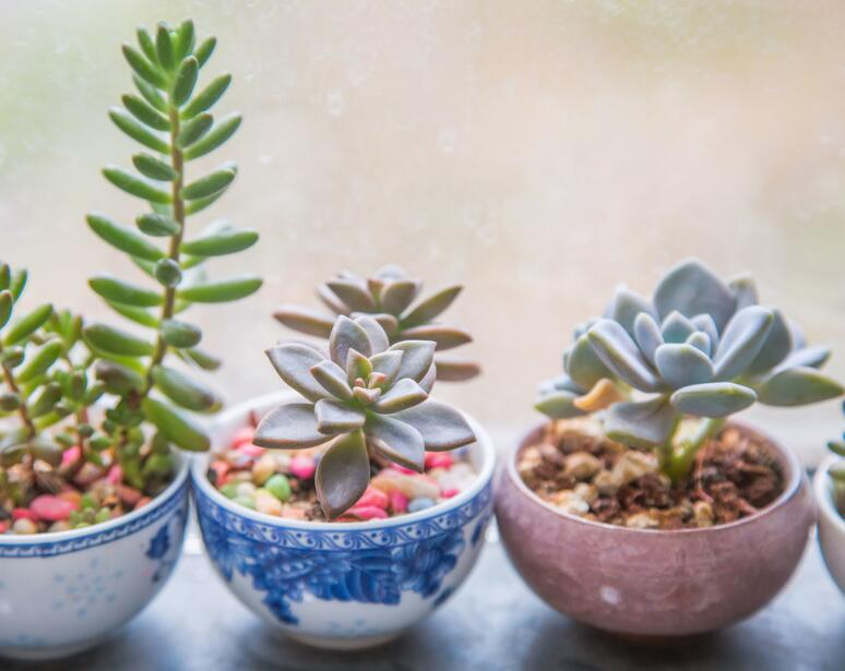 Don't throw away unused cups, it can be turned into a flowerpot